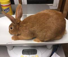 8 week old New Zealand bunny rabbits