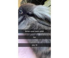 Gorgeous social rabbits